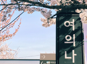 A sign with Korean letters photographed against cherry blossoms.